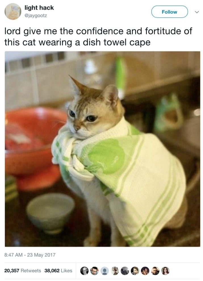 Honestly Just Read These 23 Hilarious Cat Tweets Pushes Plant f Table