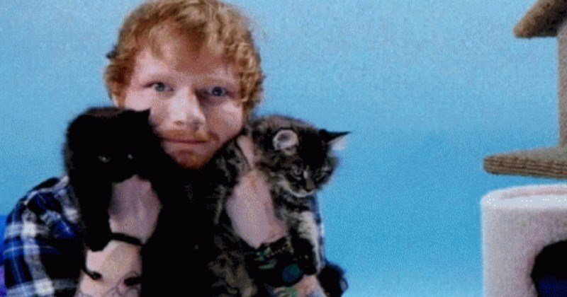 Ed Sheeran music video Japan Cats cat island