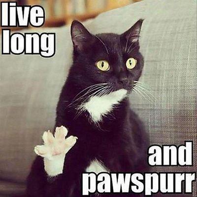 Cat Happy Birthday Meme Happy Birthday Black Cat Meme