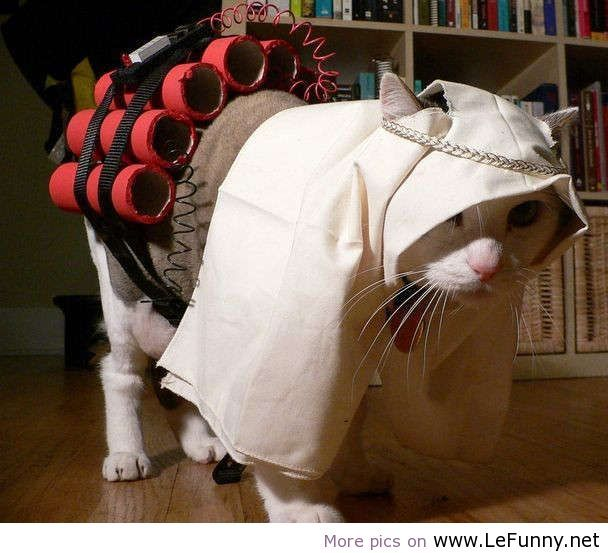 Funny cat Halloween costume