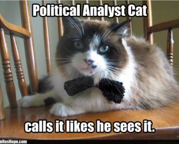 Download the Inspirational Funny Cat Political Memes