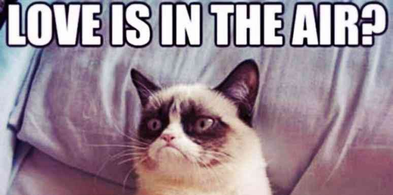 Who Is Grumpy Cat 21 Grumpy Cat Memes And Quotes About Love & Life