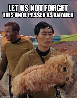 Funny Star Trek Alien Dog Picture