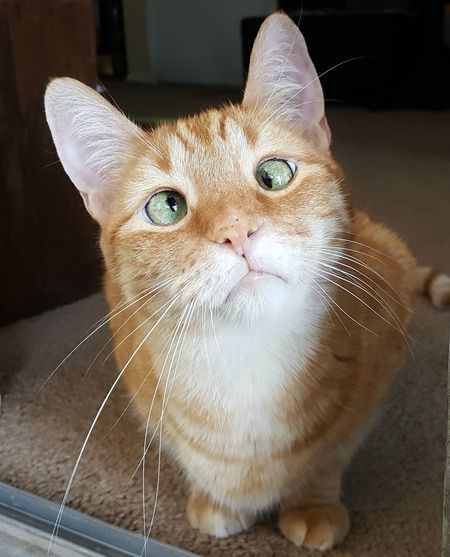 Show your support for Saving Grace Rescue Inc by voting for Jarvis P Weasley in the Saving Grace Rescue 2018 Calendar Contest