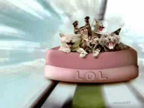 Lots of funny kitties celebrating to happy birthday song instrumental for your special day