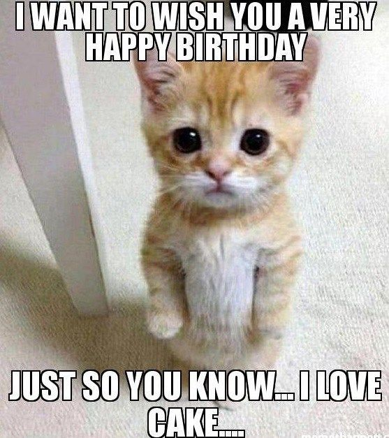 20 Adorbs Happy Birthday Cat Memes