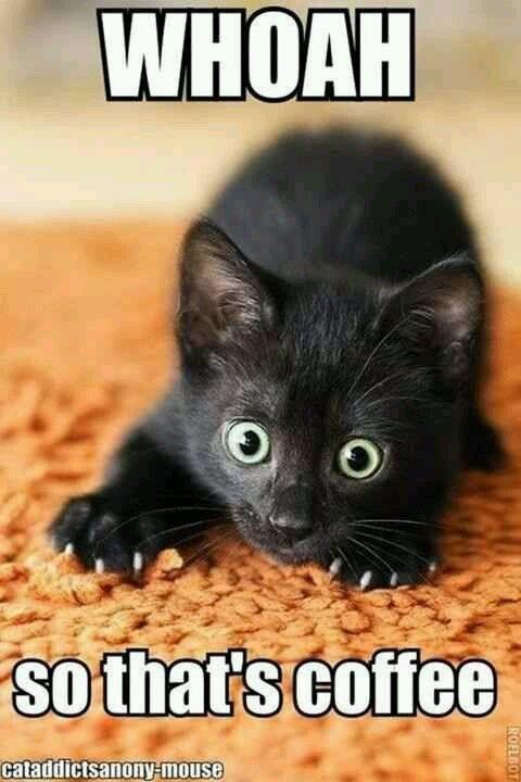 29 Funny Cat Memes