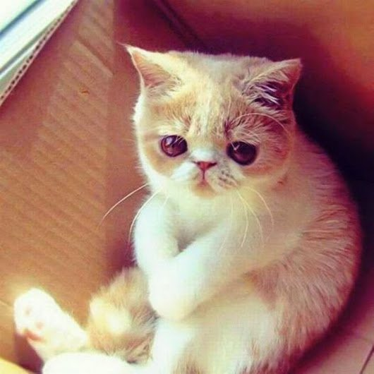 Say something funny to cheer up this cute cat Please follow our amazing