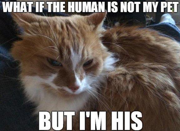 cat memes 1