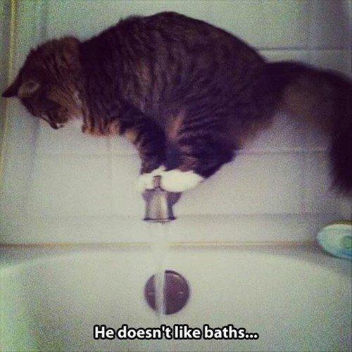 Cats bath funny stuck