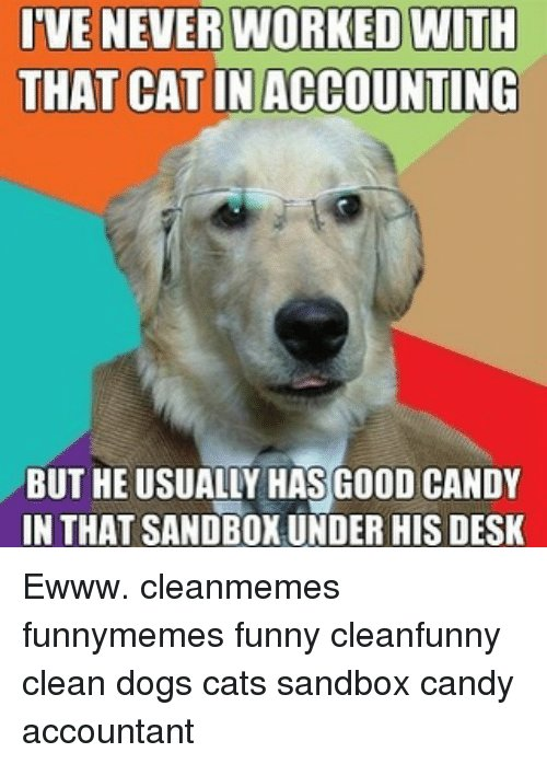 Candy Dogs and Memes TVENEVER WORKED NITH THAT CAT IN ACCOUNTING BUT HE E cleanmemes funnymemes funny cleanfunny clean