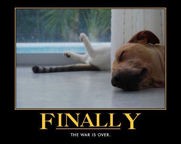 "Funny Pet s on Twitter "" funny cat dog war over meme"