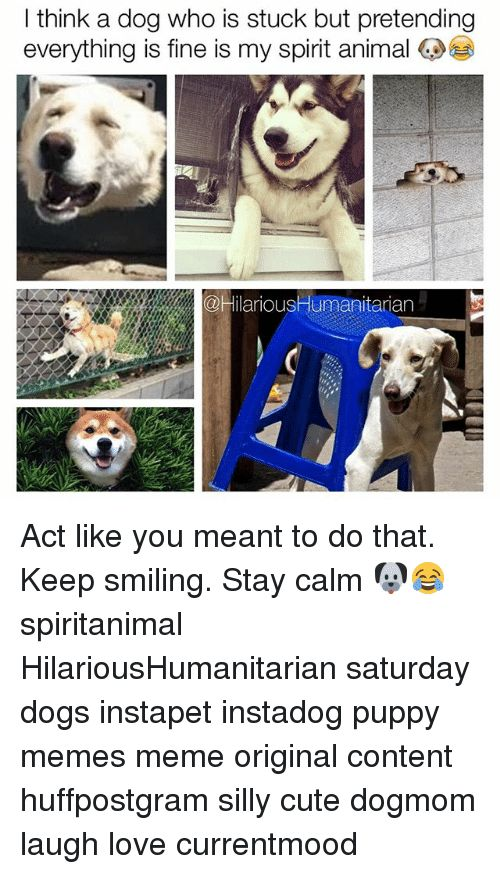 25 Best Memes About Dog Dog Memes
