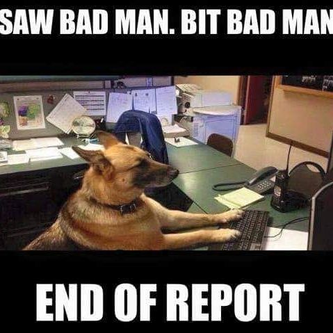 Image result for funny looking police dog