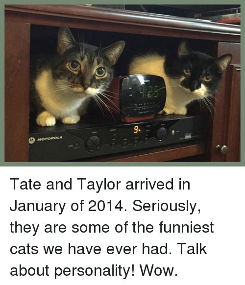 Memes 🤖 and Taylor 9 AA Tate and Taylor arrived in January