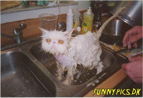 soaked cat