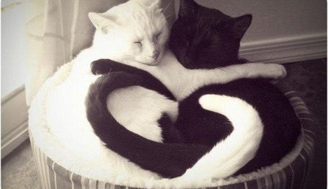 Cat Love Cat 29