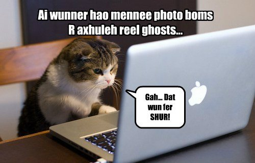 Cats ghost halloween the internets