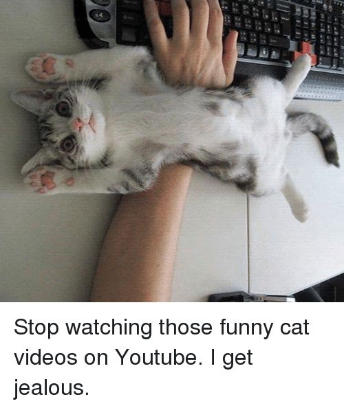 Jealous Memes and 🤖 hraa 1 44 Stop watching those funny cat