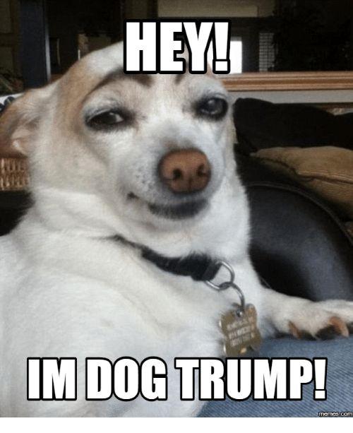 Trump Meme Trump Memes and Hi Im the Dog HEY IMDOG TRUMP
