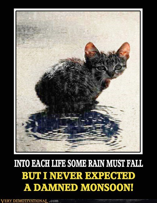 Download the New Cat Rain Memes Funny