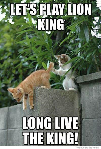 lets play lion king cats