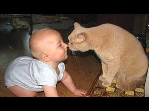 03 42 Popular Cute And Funny Babies Laughing At Cats pilation Best Funny Videos
