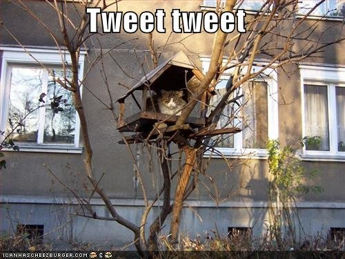 Funny Cat funny pictures cat pretends to be bird