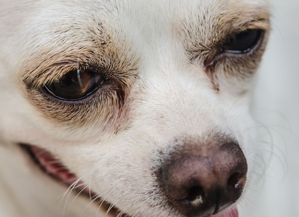 Animal Abuse Case Dog Ingests Methamphetamine