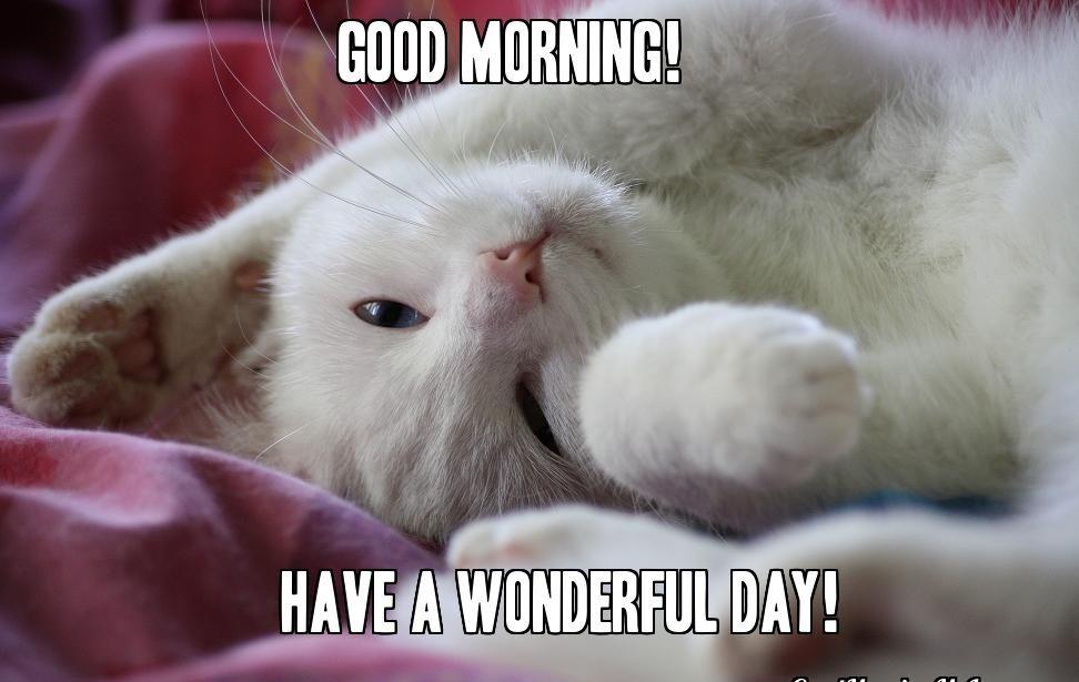 Sweet Good Morning Cat Memes