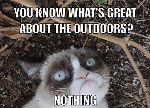 4 Grumpy cat goes hiking… and s grumpy
