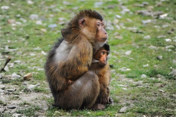 """The phrase """"just monkeying around"""" has a whole new meaning thanks to a couple in Nanyang China That s partly because Huang Aiqing 34 trains monkeys for"""