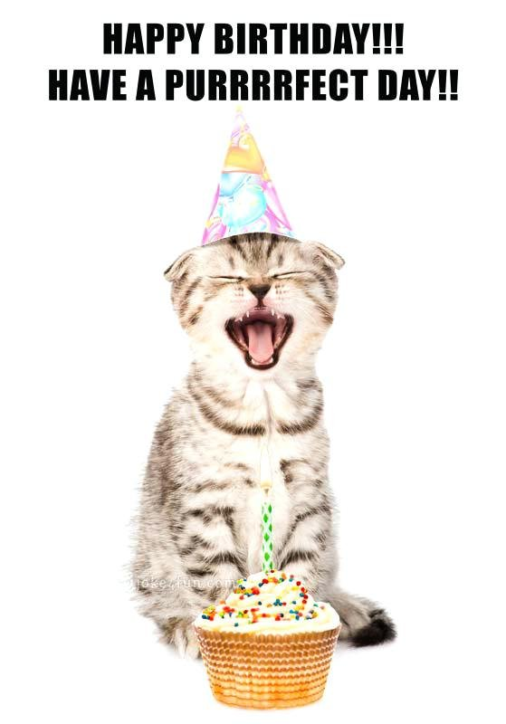 happy birthday cat funny cats memes kitty