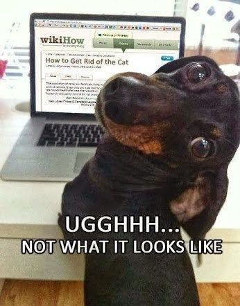 Need to him a privacy screen Funny dog meme