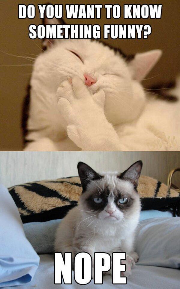 10 Grumpy Cat S Best Hilarious Memes I Can Has Cheezburger