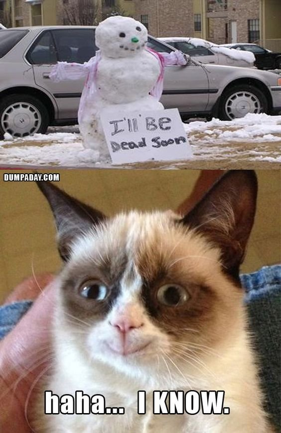 35 Funny Grumpy Cat Memes Random Stuff Pinterest