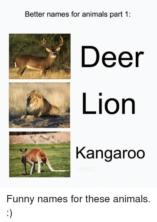 Animals Anime and Deer Better names for animals part 1 Deer Lion