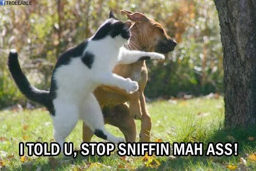 Funny dog and cat fighting picture