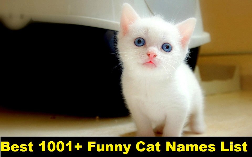 I Have Best Funny White Cat Names & Funny Black Cat Names Read More Funny