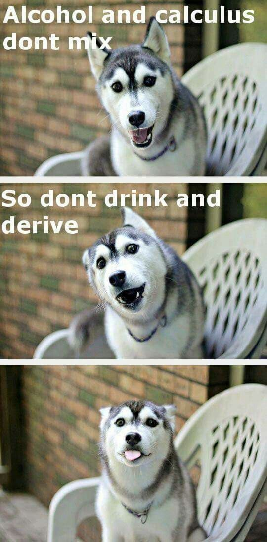 Pun Husky Funny Husky Meme Funny Jikes Puppy Quotes Funny Puns Hilarious