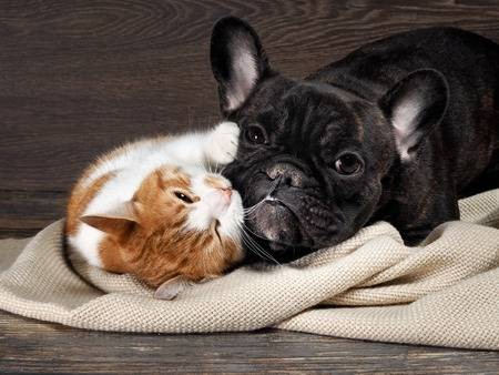 Funny cat and dog lying on the floor playing hugging each other