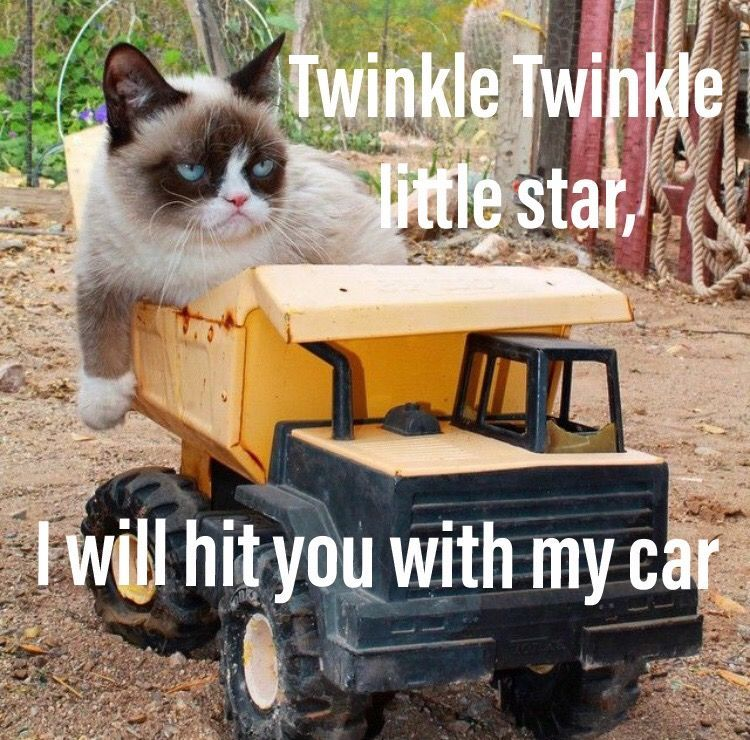 ✨Twinkle Twinkle little star I will hit you with my car push you off a roof so high hope you break your neck and twinkle twinkle little star I will