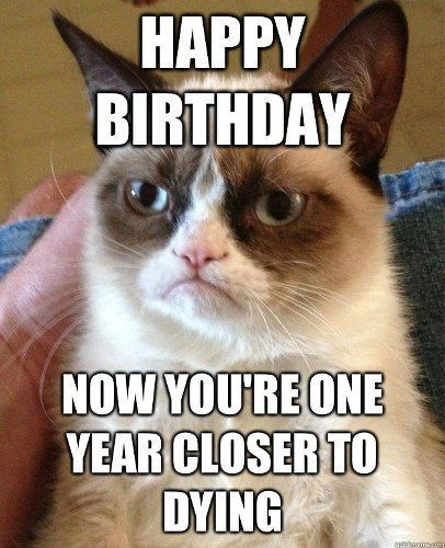 top 10 grumpy cat memes hahahah Grumpy cat and I see eye to eye I actually say something just like this every year on my birthday