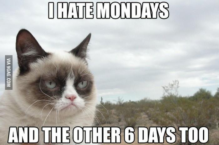 Grumpy Cat Memes 01