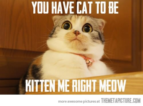 funny cat scared meme