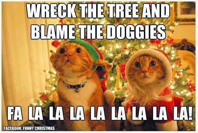 Download the Suprising Funny Christmas Tuxedo Cat Memes