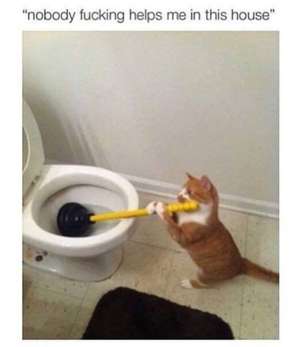 Funny Cat Memes Helping Around The House