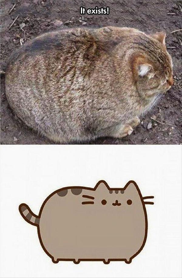 Cool funny fat cat memes