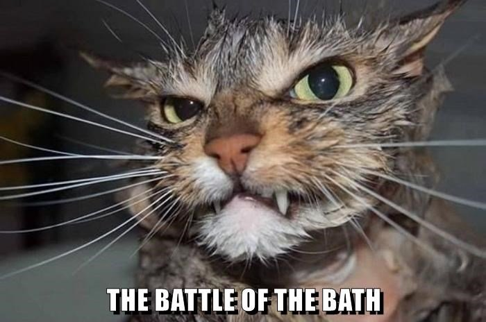 animals Battle Cats bath caption