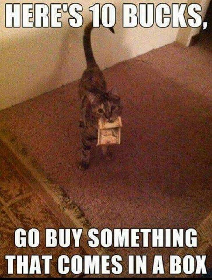 funny cat meme of giving 10 bucks for you to him something in a box